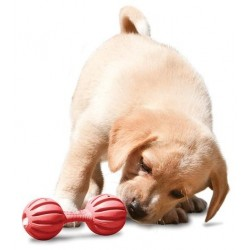 Premier® Waggle™ (M) - Puppy Treat dispensing toy